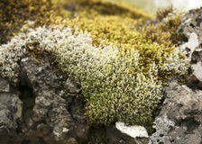 Moss on rock. Up close Stock Image