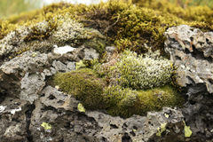 Moss on rock. Up close Stock Photo