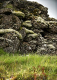 Moss on rock. Moss on a volcanic rock in a grassy field Royalty Free Stock Photo