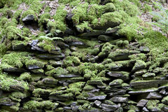 Moss rock wall background stock images