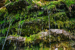 Moss on the rock with water jets. Estonian waterfall Jagala Royalty Free Stock Photos