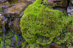 Moss on the rock in waterfall day time. Long exposure shot of moss on the rock in waterfall day time for background Royalty Free Stock Photography