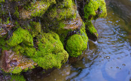 Moss on the rock in waterfall day time. Long exposure shot of moss on the rock in waterfall day time for background Stock Photos