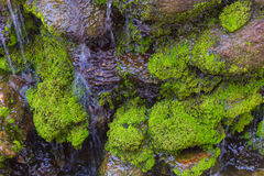 Moss on the rock in waterfall day time. Long exposure shot of moss on the rock in waterfall day time for background Stock Image