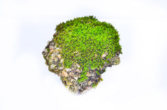 Moss on rock. On white background Royalty Free Stock Image