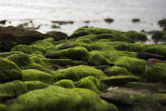 Moss Rocks Stock Foto
