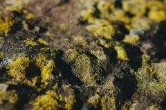 Moss on rocks Stock Image