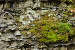 Moss on the rocks. With abstract Stock Image