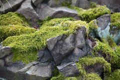 Moss on rocks. As background stock photos