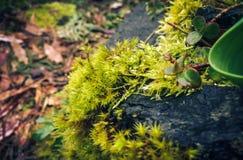 Moss among rocks and bark Stock Images