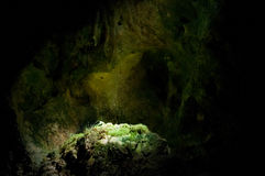 Moss on rocks in cave. Moss on rocks in ancient dark limestone, dripstone cave, close up royalty free stock image