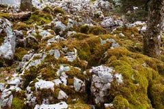 Moss on rocks Stock Photo
