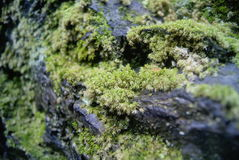 Moss on the rocks Royalty Free Stock Photography
