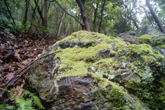 Moss on the rocks Royalty Free Stock Photo