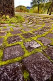 Moss between rocks Royalty Free Stock Photography