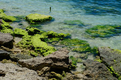 Moss and rocks on the sea in Phan Thiet, Vietnam Stock Photos