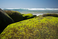 Moss on rocks Stock Photography