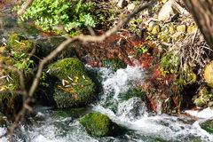 Moss on rocky river bank Stock Images