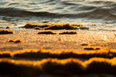Moss on the rocky shore Royalty Free Stock Photos