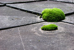 Moss on the roof stock image