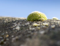 Moss on a roof Royalty Free Stock Photo