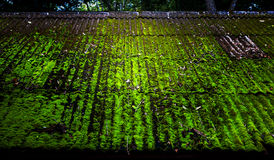 Moss roof. Moss cover in a roof Stock Image