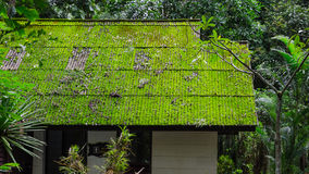 Moss roof in green season Royalty Free Stock Images