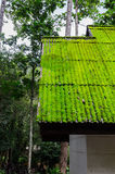 Moss roof in green season Stock Photo