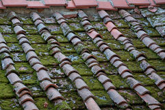 Moss on the roof. Mosses are flowerless plants belonging to the division Bryophyta. They are typically 1–10 cm (0.4–3.9 in) tall, though some stock photos
