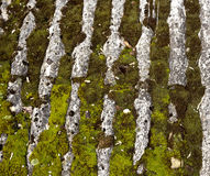 Moss on a roof Stock Images