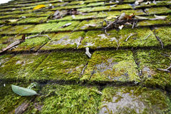 Moss on roof Stock Photography