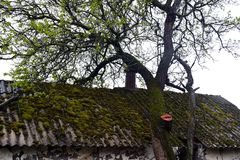 Moss on the roof. Photo taken on: April 23 Sunday, 2017 Royalty Free Stock Photos