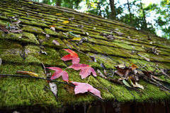 Moss on roof and Red Leaf Stock Photography