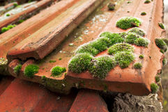 Moss on roof tiles Stock Photos