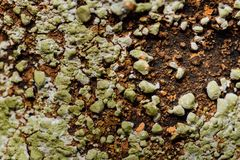Moss and rust with mold. Background. Stock Photos