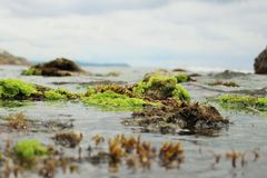 Moss in the sea. Some moss in the rocks in the Puerto Colombia sea in Barranquilla city Royalty Free Stock Photos
