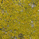 Moss seamless background Royalty Free Stock Image