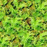 Moss seamless texture background. Royalty Free Stock Photos