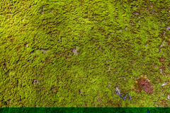 Moss Seamless Tileable Texture verde Imágenes de archivo libres de regalías