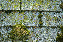 Moss on shingles. Moss on roofing shingles Stock Photo
