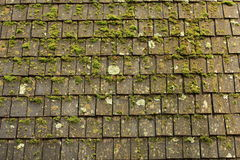 Moss and shingles. Moss growing on a roof, Yosemite National Park Royalty Free Stock Photography