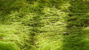 Moss shining in sunlight Royalty Free Stock Images
