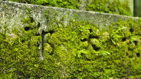 Moss in a Shinto temple Royalty Free Stock Photos