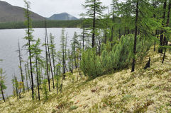 Moss shore of the lake on a cloudy day in Yakutia. Stock Photos