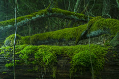 Moss. Shot with Nikon D5100  yn560 II Stock Images