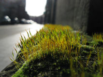 Moss. On the sidewalk in sunset Royalty Free Stock Images