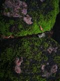 Moss similar to man page Royalty Free Stock Photo
