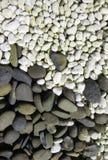 moss skały kamienia konsystencja Zdjęcia Royalty Free