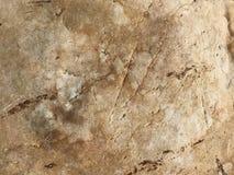moss skały kamienia konsystencja tło sepiowy abstrakcyjne Fotografia wizerunek Fotografia Royalty Free