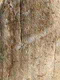 moss skały kamienia konsystencja tło sepiowy abstrakcyjne Fotografia wizerunek Zdjęcia Stock